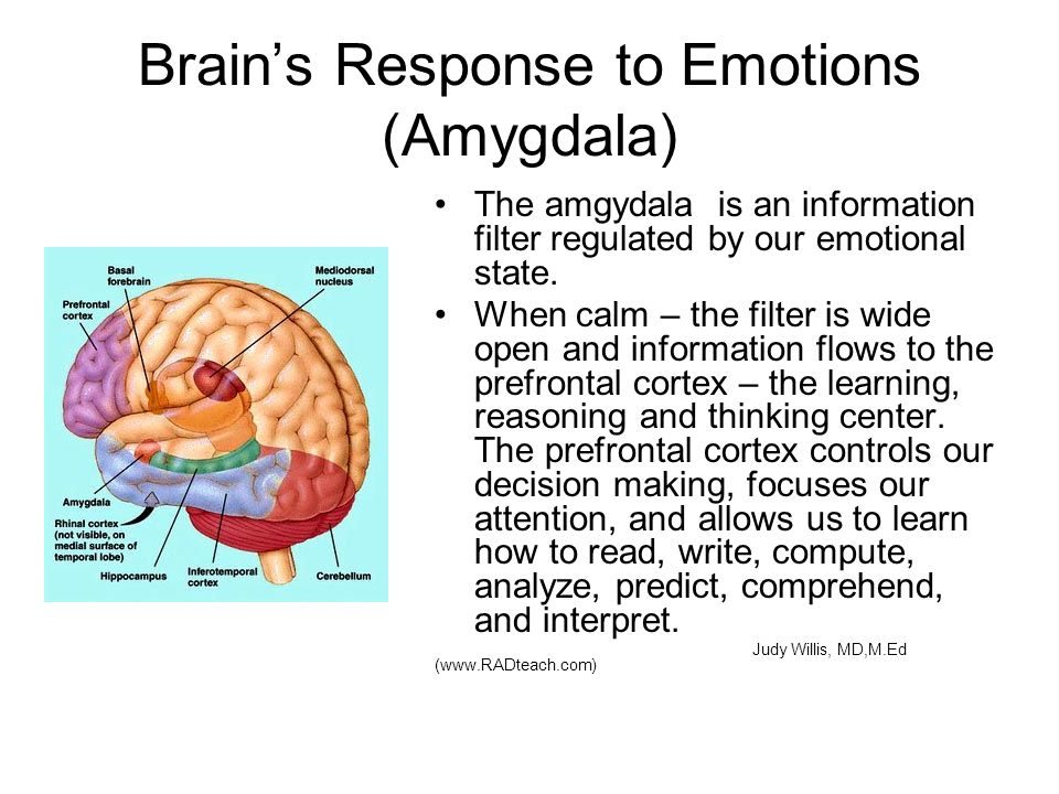 Amygdala diagram