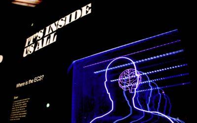 Brain featured image