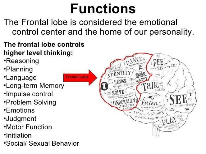 Frontal Lobe behaviour