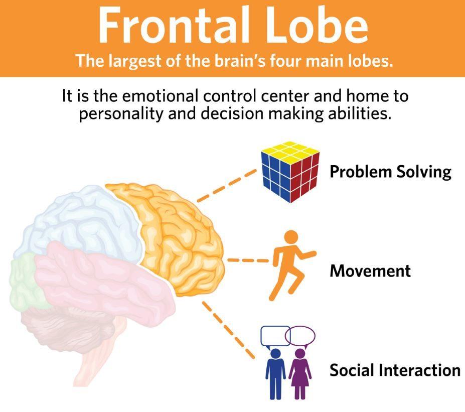 Frontal lobe function